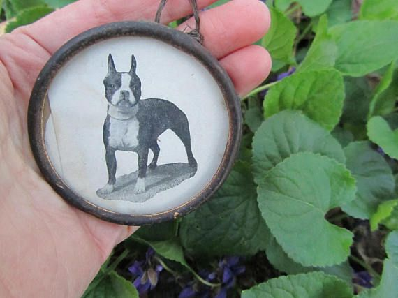 RESERVED Vintage Boston Terrier Framed Illustration Collectible ...