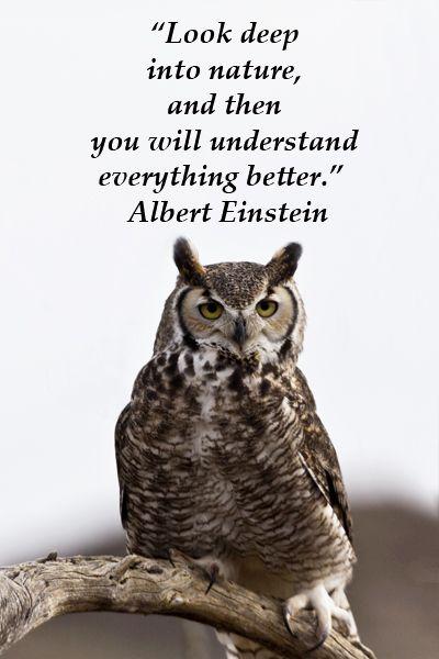 Citaten Over Uilen : Pin de amandine derissen en qoutes citaten owl y spreuken