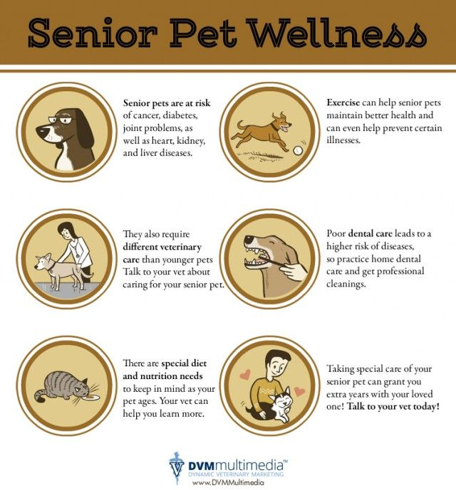 Senior Pets Special Care For Special Friends Infographic Pet