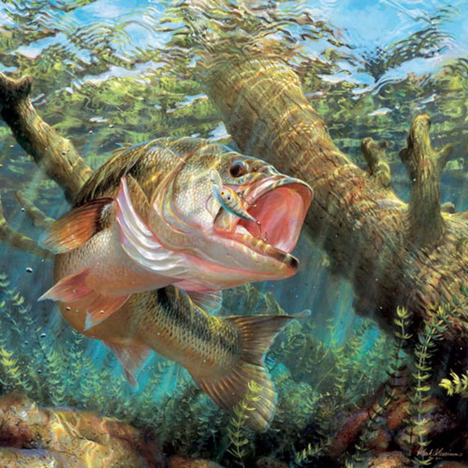 Resultado de imagem para fish wallpaper Fishing Pinterest