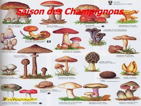 Saison des Champignons> | Champignons farcis, Champignon comestible,  Cueillette champignon