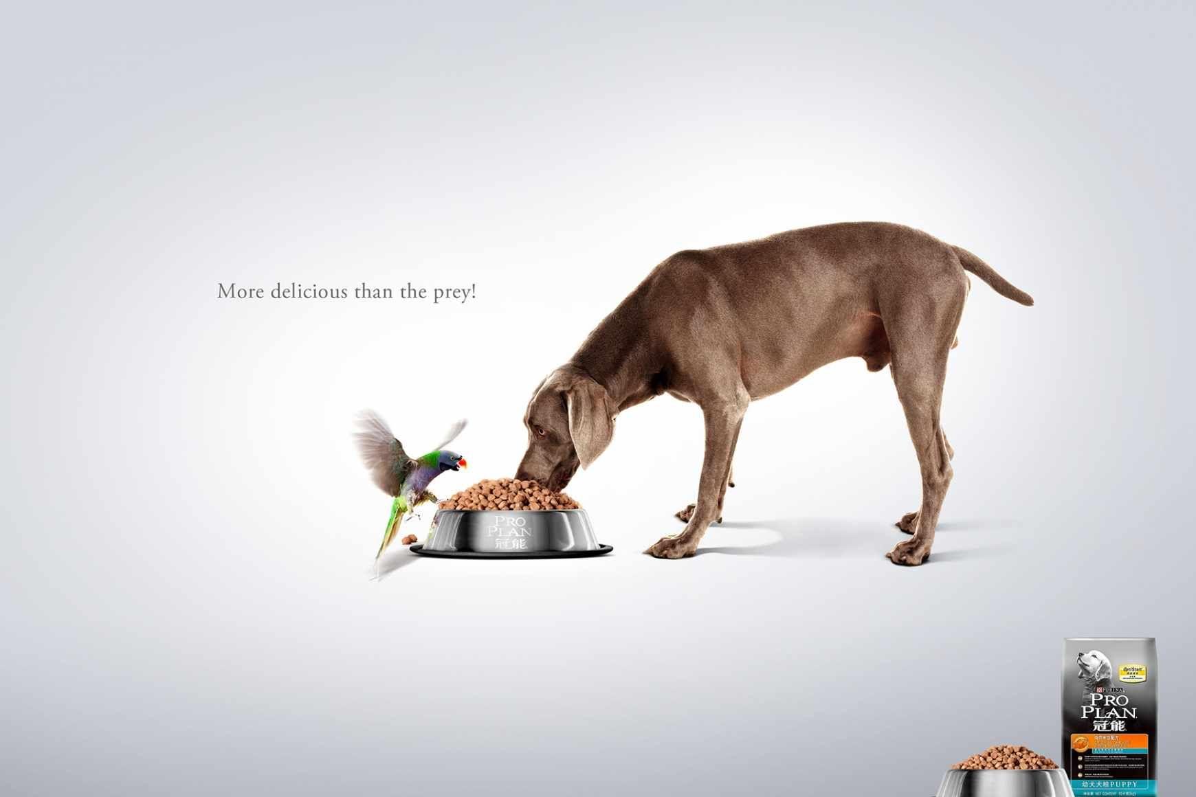 Advertising Cat Food Cerca Con Google Pet Advertising Food