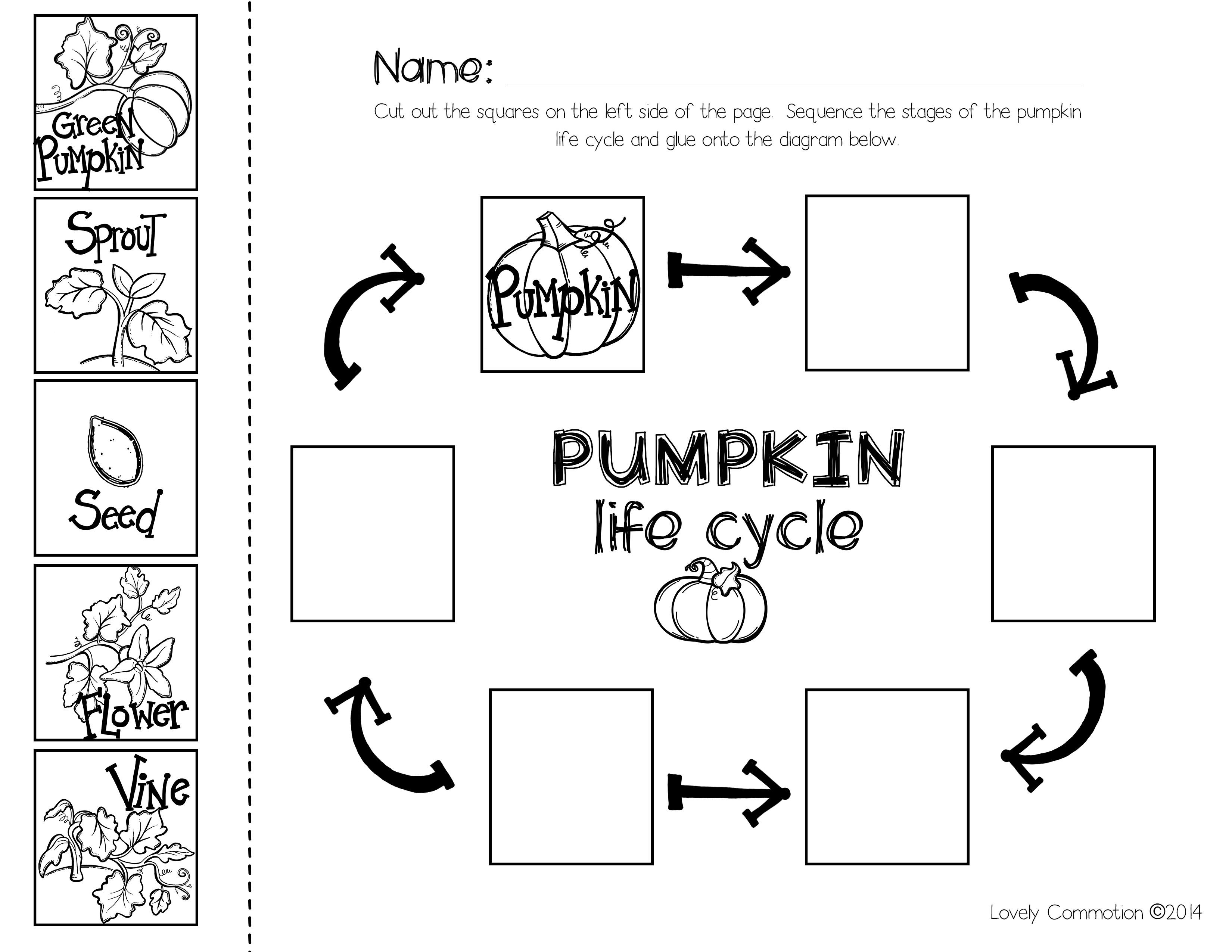 photograph about Pumpkin Life Cycle Printable identified as Pumpkin Sequencing with the e book \