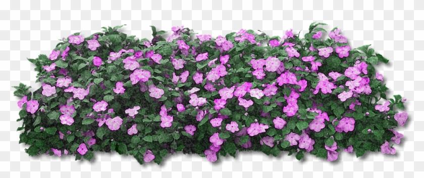 Enjoy Hd High Quality Flowers Purple Purple Flower Nature Nice Spring Pink Flower Bush Png Transparent Png And Do Purple Flowers Pink Flowers Flowers