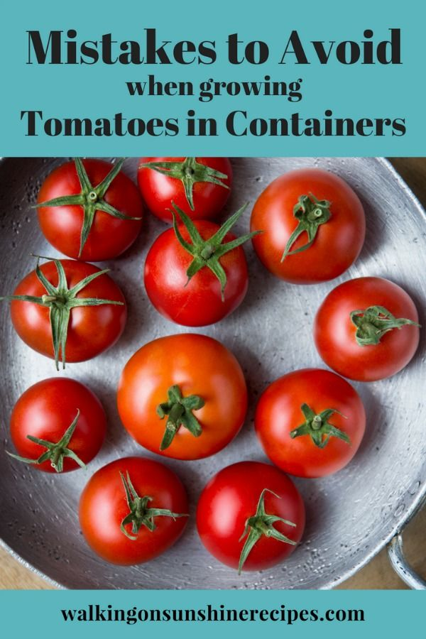 5 Mistakes to Avoid When Growing Tomatoes in Containers ...