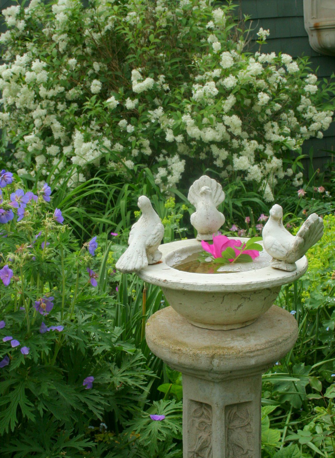 Pin de emeterio mantecon siller en gardens jardiner a jard n hierbas arom ticas y plantas jardin - Jardin de aromaticas ...