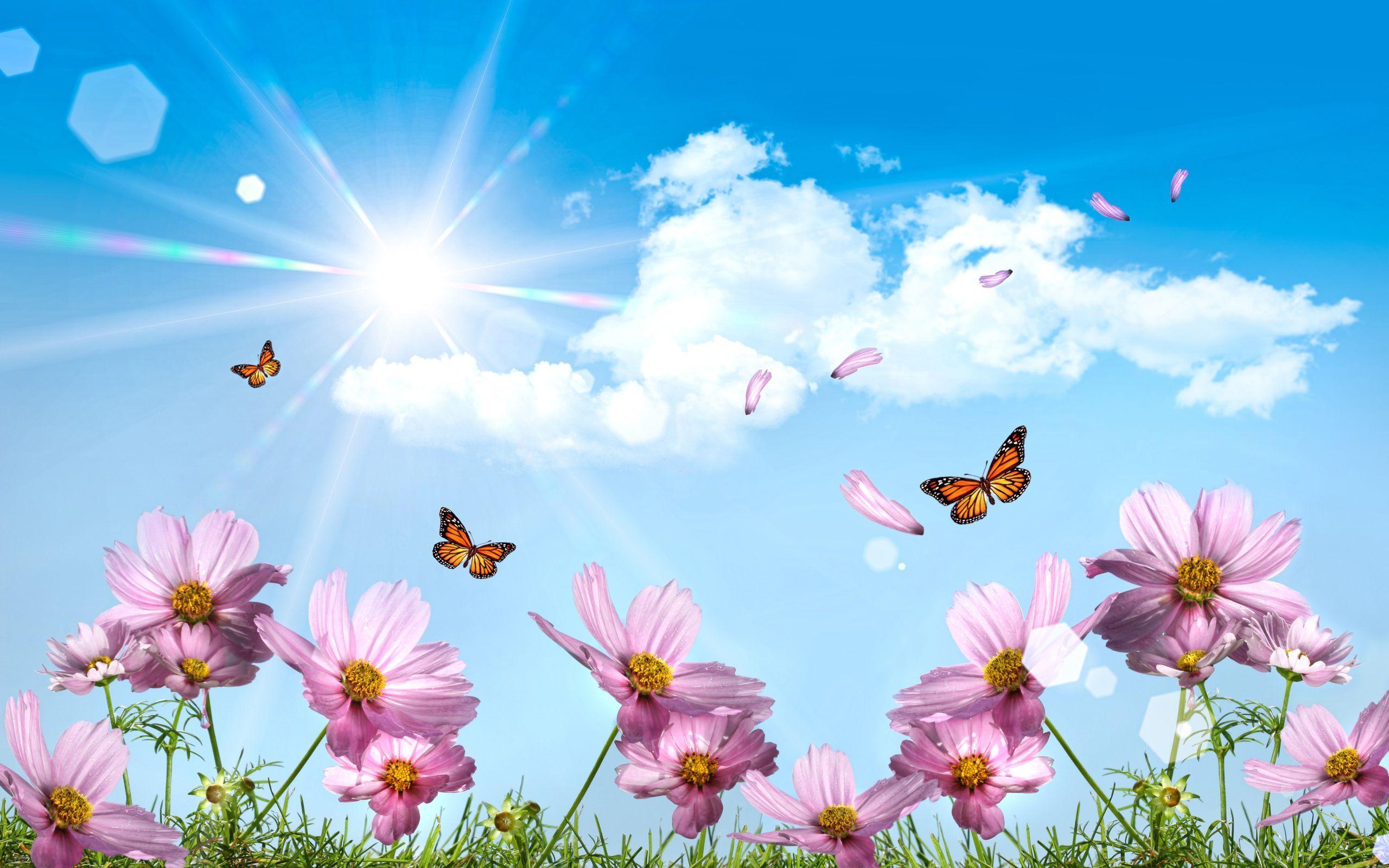 Butterflies Desktop Wallpapers Jpg 2560 1600 Spring Wallpaper Summer Wallpaper Butterfly Wallpaper