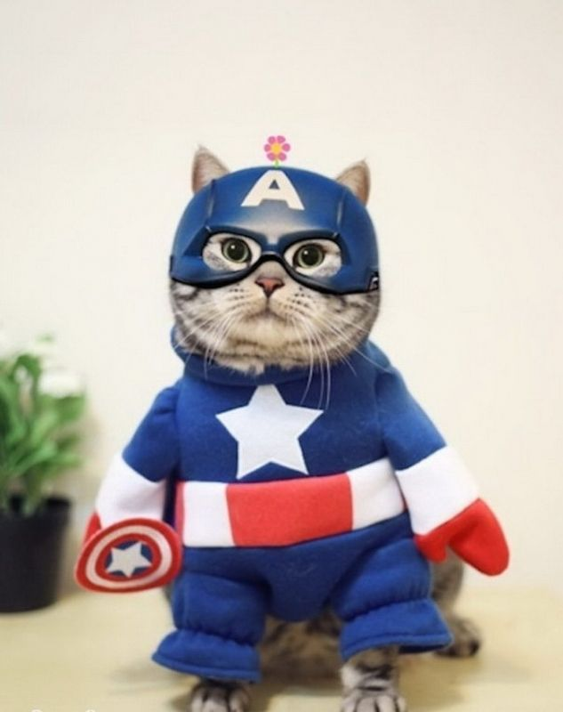 картинки про супер кошек рада, если присоедините