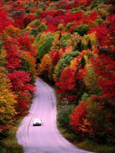 Autumn's many Colorful trees.