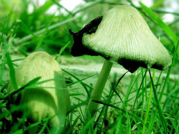 Color colores planta plantas hongo hongos vista de frente - Plantas de jardin exterior ...