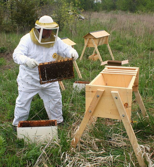 Installing the bees in a top bar hive | Backyard bee, Bee ...