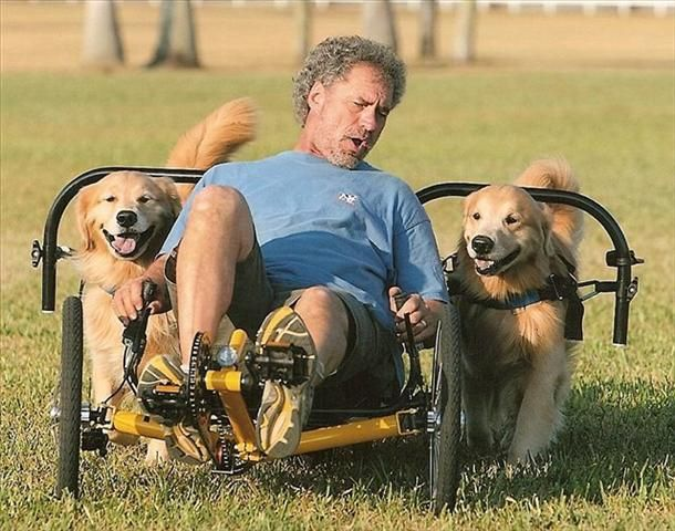 dog powered scooter | aaa survival | Dogs, Dog training, Dog