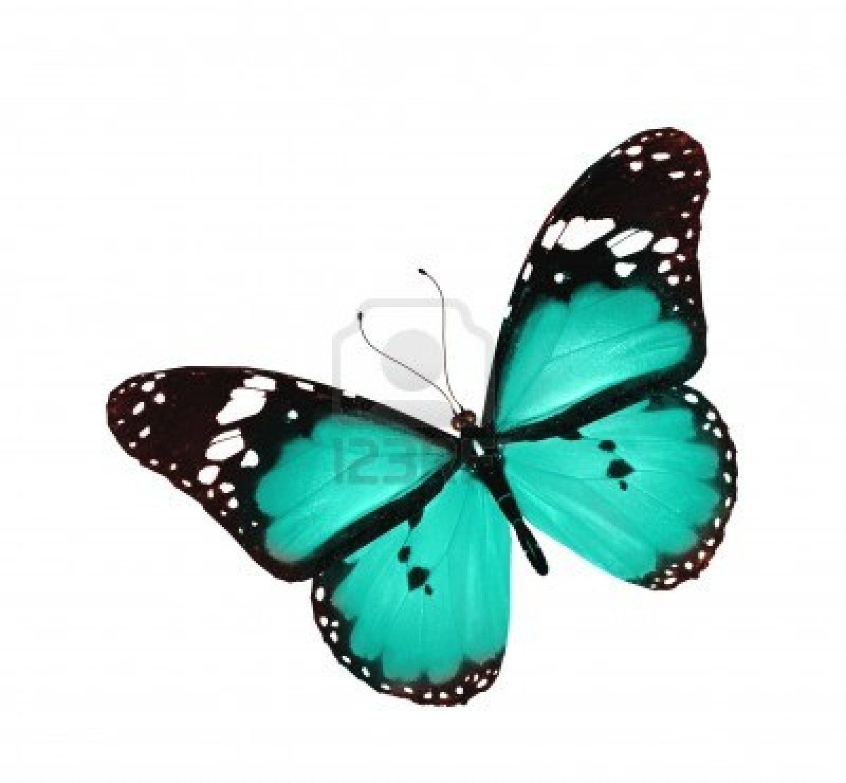 bleu papillon volant papillons butterflies pinterest. Black Bedroom Furniture Sets. Home Design Ideas
