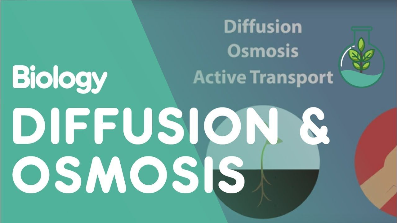 Transport In Cells Diffusion And Osmosis Biology For