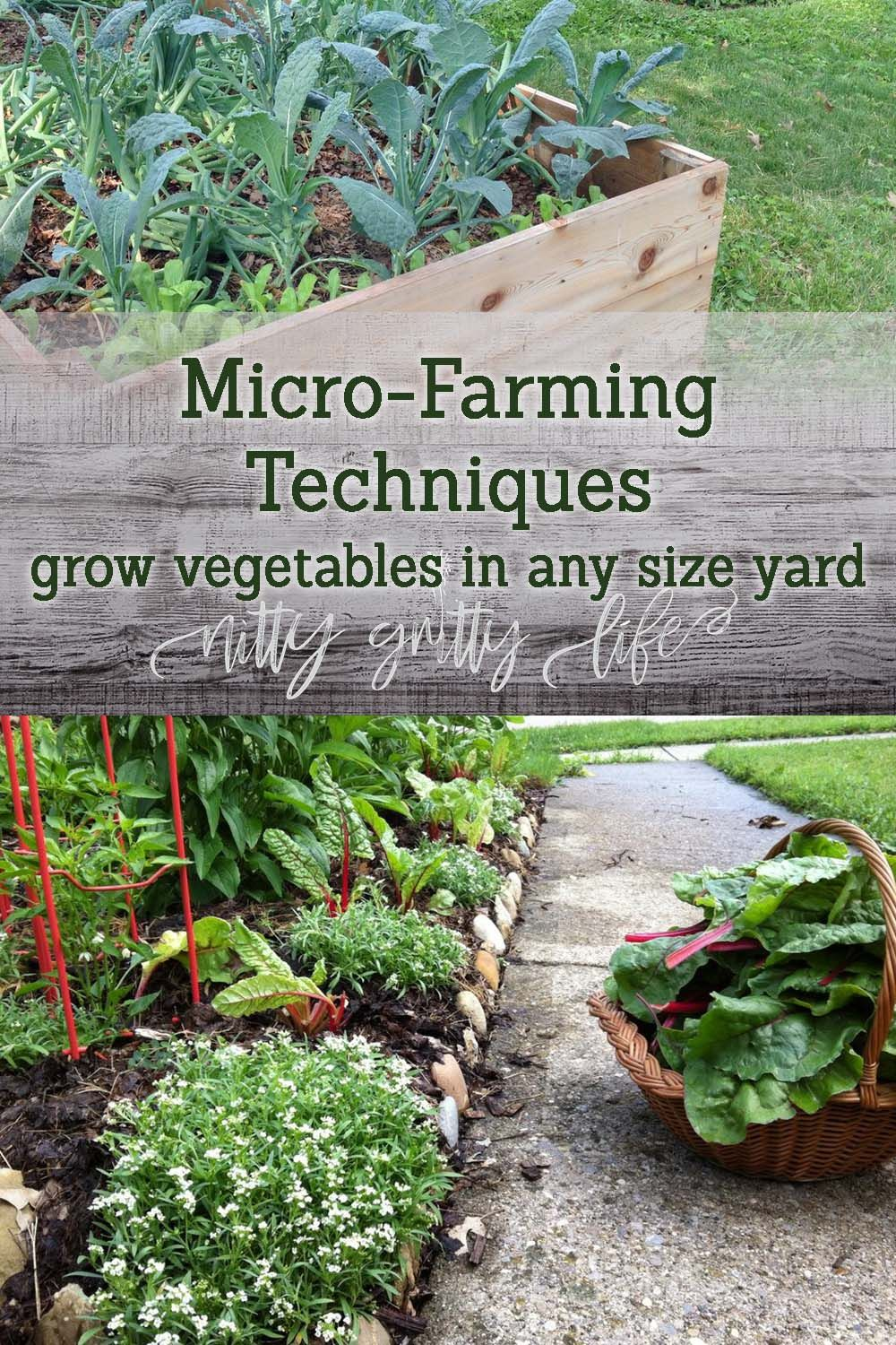 MicroFarming Techniques for Any Size Yard or Garden is part of Organic vegetable garden, Micro farm, Home vegetable garden, Farming techniques, Farm books, Wildflower garden - No matter the size of your yard or garden, microfarming techniques from The Suburban MicroFarm book can offer productive solutions to maximize your efforts!