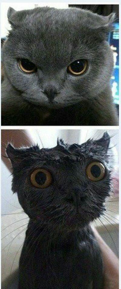 Seco/mojado.