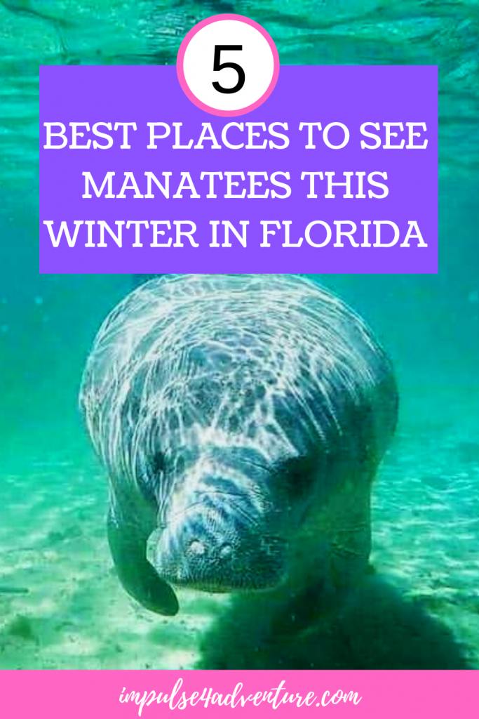 5 Best Places To See Manatees In Florida This Winter Manatee Places To See Dry Tortugas National Park