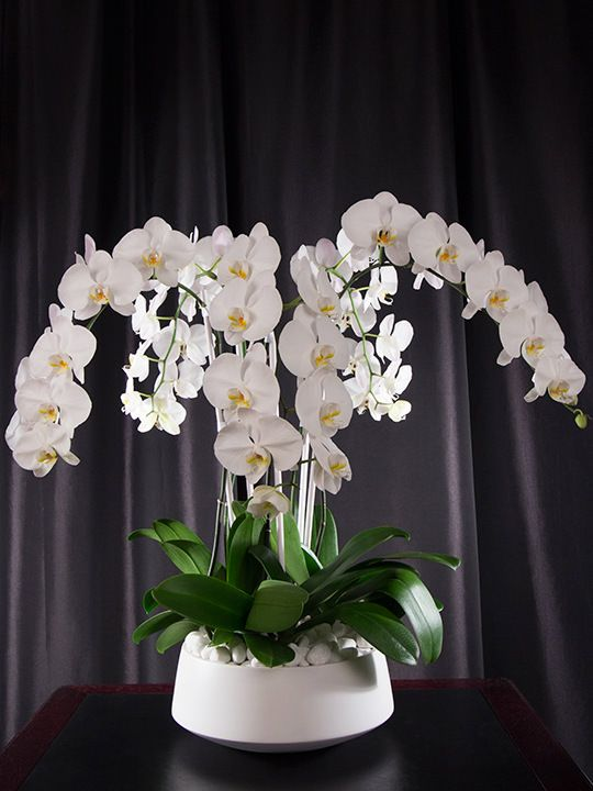 Grandioso White White Orchid Arrangements Orchid Flower Arrangements Flower Arrangements