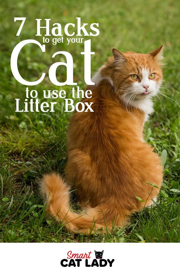 7 Hacks to Get Your Cat to Use the Litter Box Cats, Cat