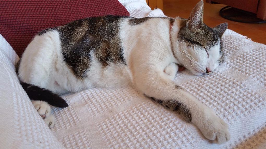 Mia Durmiendoapiernasuelta Por Favor Nomolesten Gato Cat