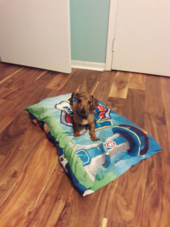 Dachshund puppies for sale warner robins ga dachshund