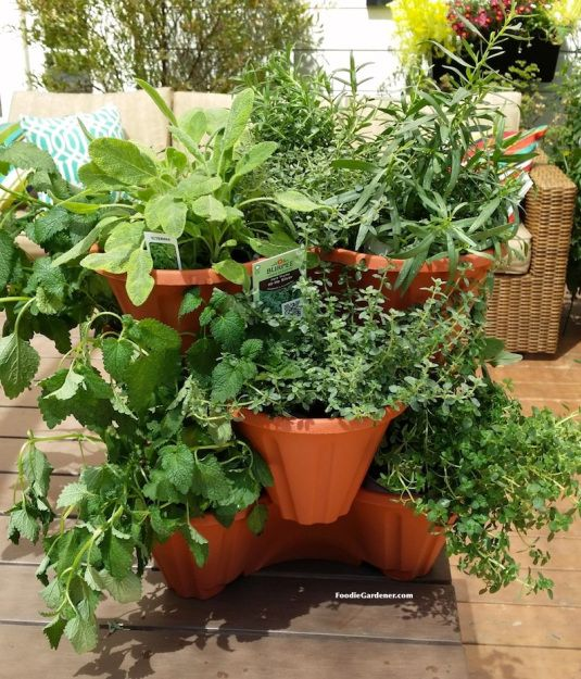 Beautiful, Functional, INEXPENSIVE! Stackable  Planters Filled With Burpee Home Garden Herbs Foodie Gardener