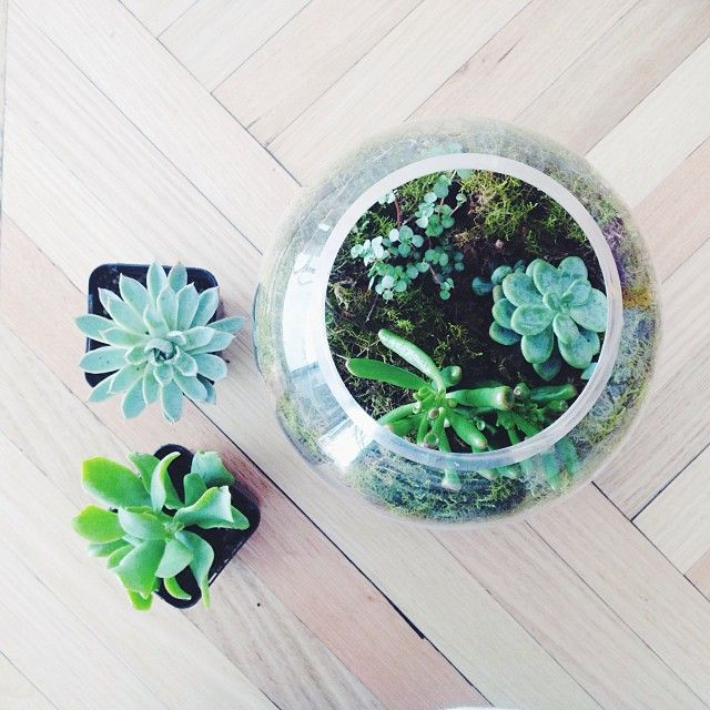 More Succulent + Moss Bowl Making! Sitting Pretty Atop My Gorgeous New Table  👌