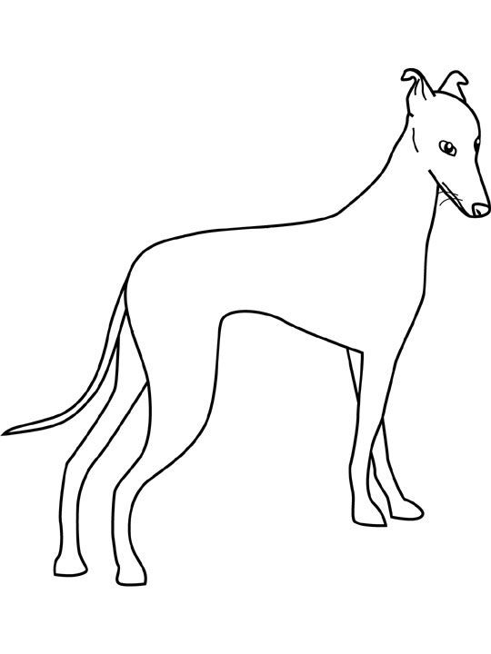 Dog Color Pages Printable Dogs Coloring Pages Greyhound Dogs