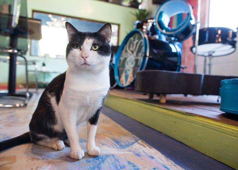 Atlanta S Cat Cafe Cats Blue Cats