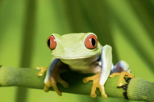 Incredible wildlife holidays to Latin America. Head to the forests of Costa Rica to see weird and wonderful wildlife.