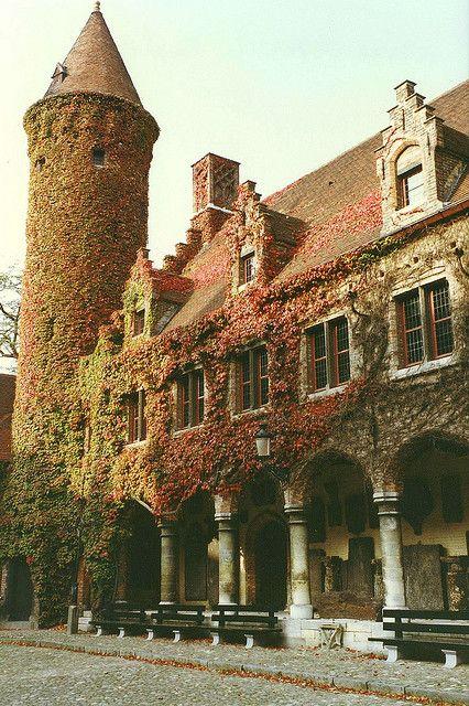 Ivy covered building in Brugge, Belgium