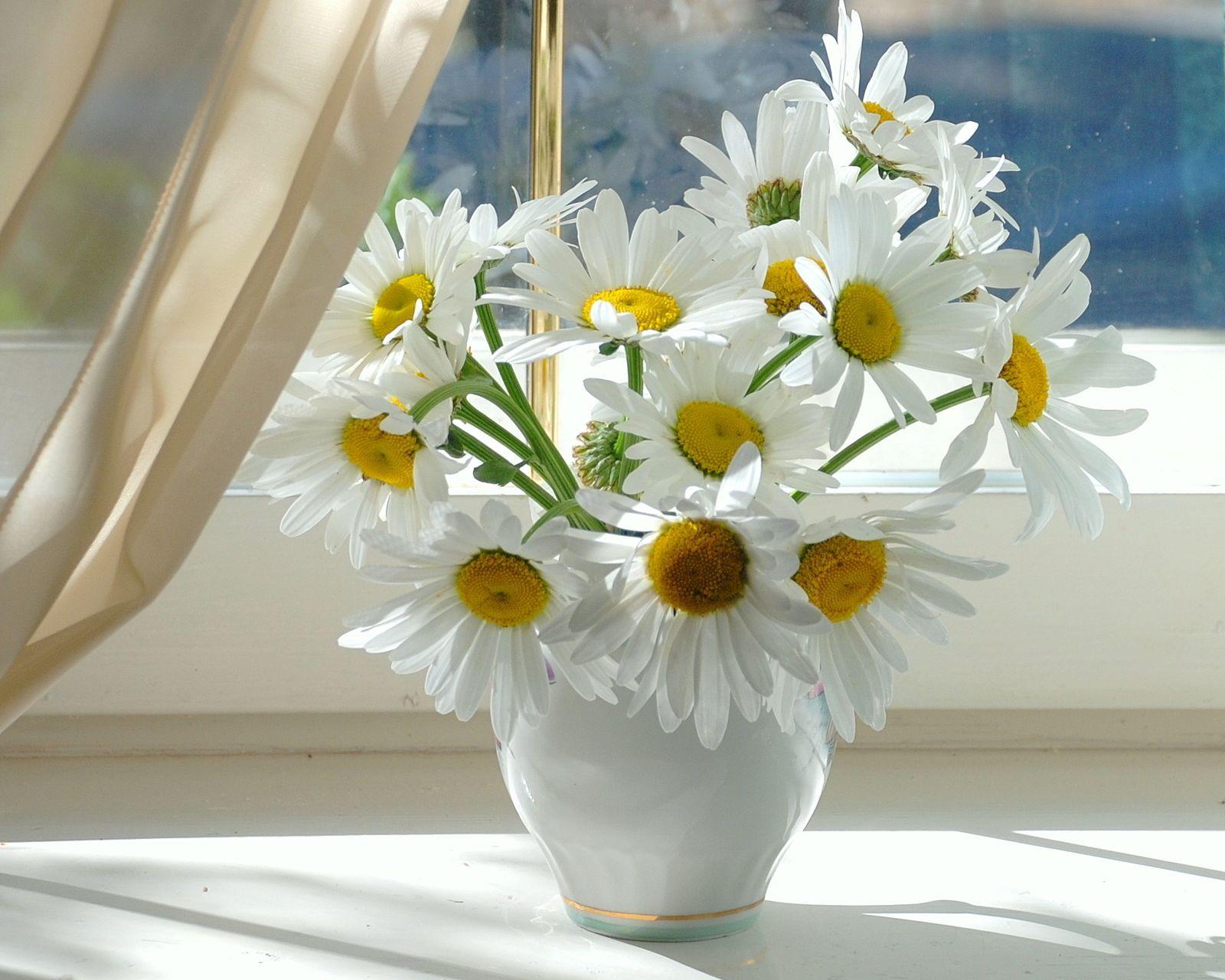 download wallpaper daisies sill vase bouquet free desktop