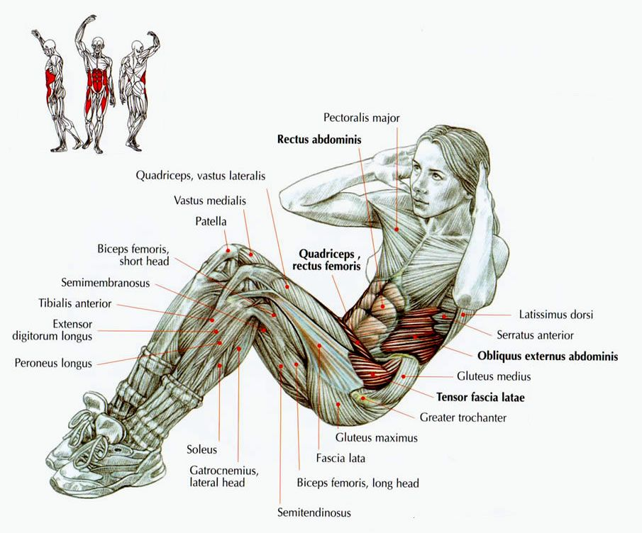 Detailed picture for situp-anatomy | Ab muscles | Pinterest ...