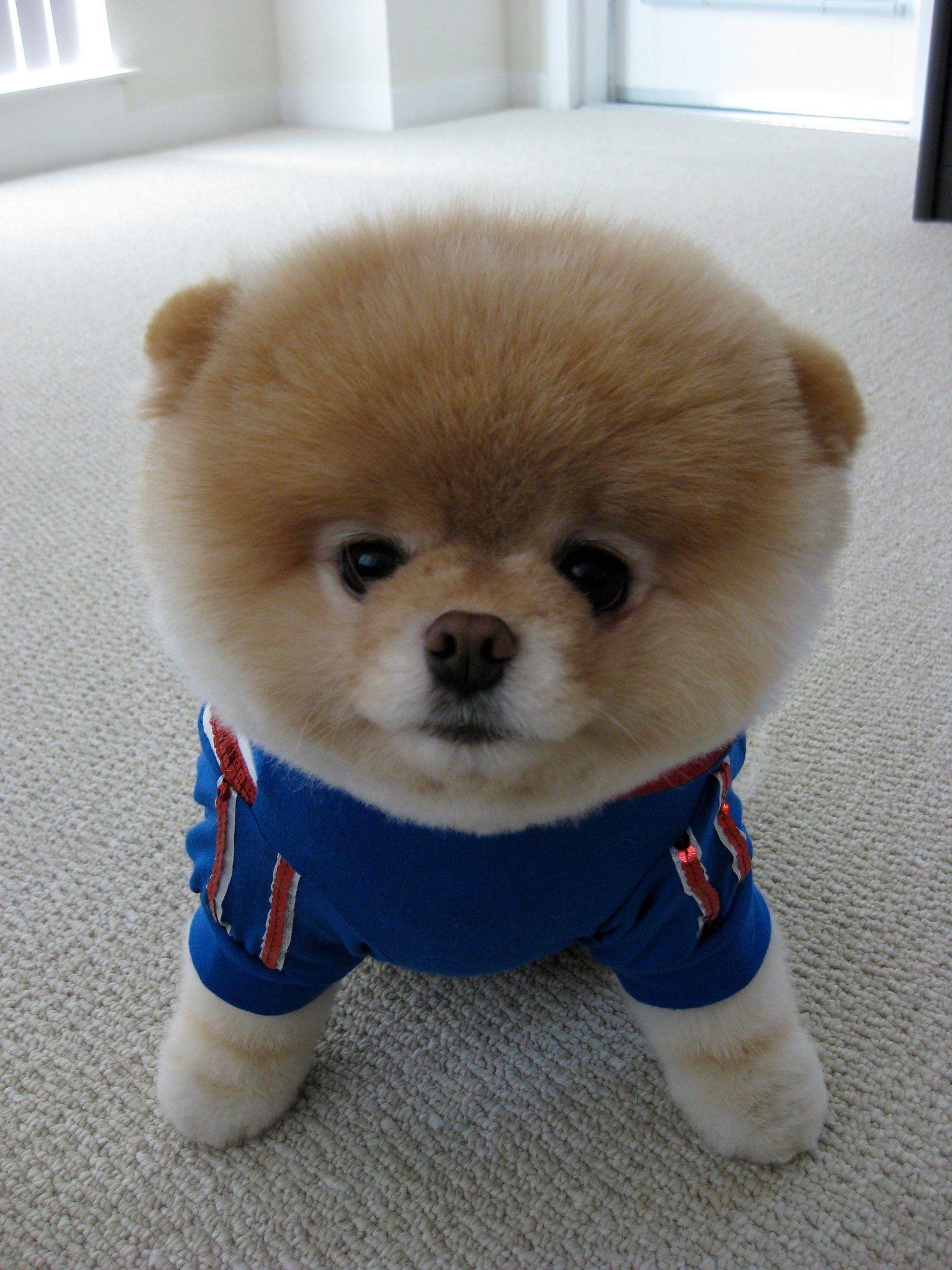 Good Boo Chubby Adorable Dog - 132a40152c2361cc5f67545d68414b40  Image_2811  .jpg