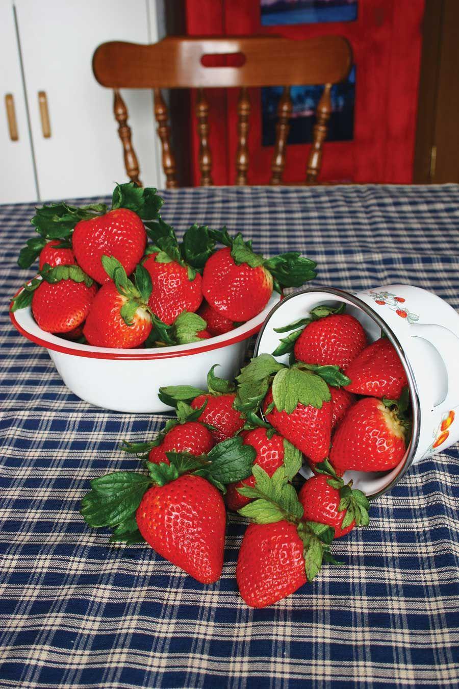 how to grow strawberry plants in winnipeg