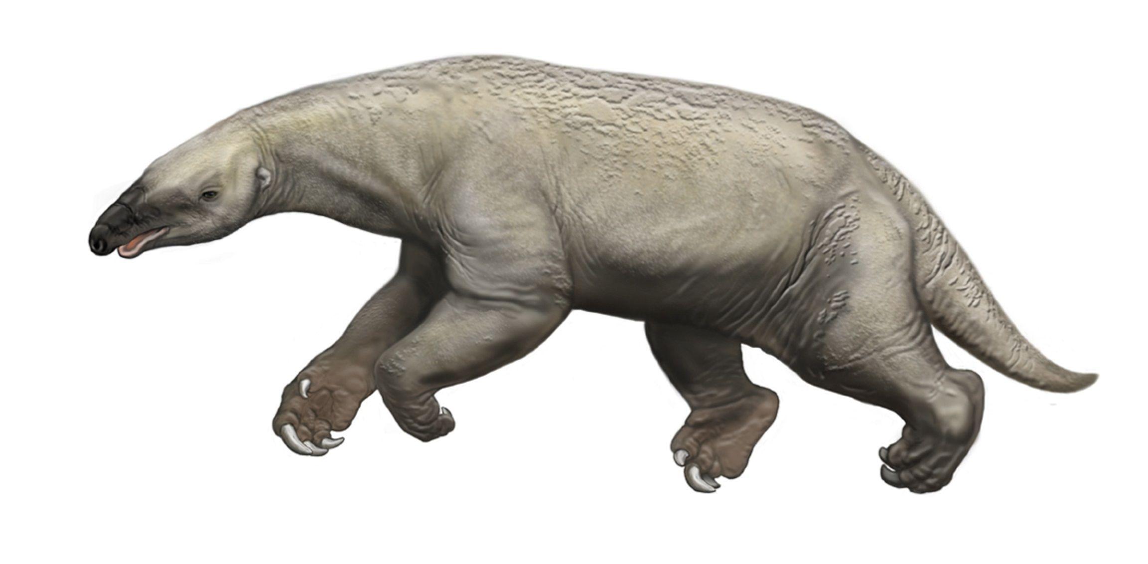 Art illustration Prehistoric Mammals Thalassocnus is