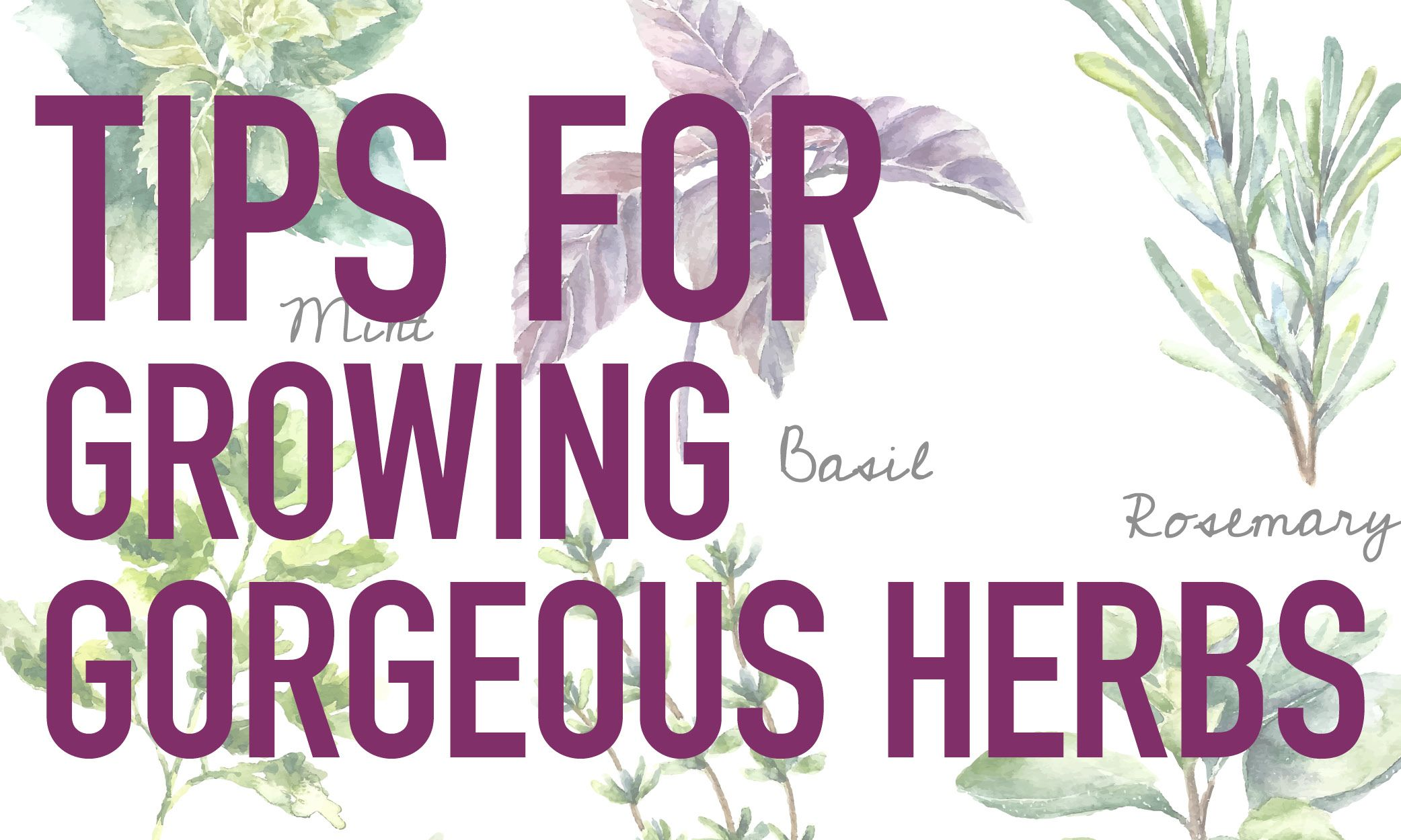 Whether it brings brightness to a beverage or spice to a sauté, herbs are invaluable, flavorful add-ins when it comes to healthy cooking. Find tips on growing these glorious garden herbs in the new issue of Loving Outdoor Living. http://www.lovingoutdoorliving.com/
