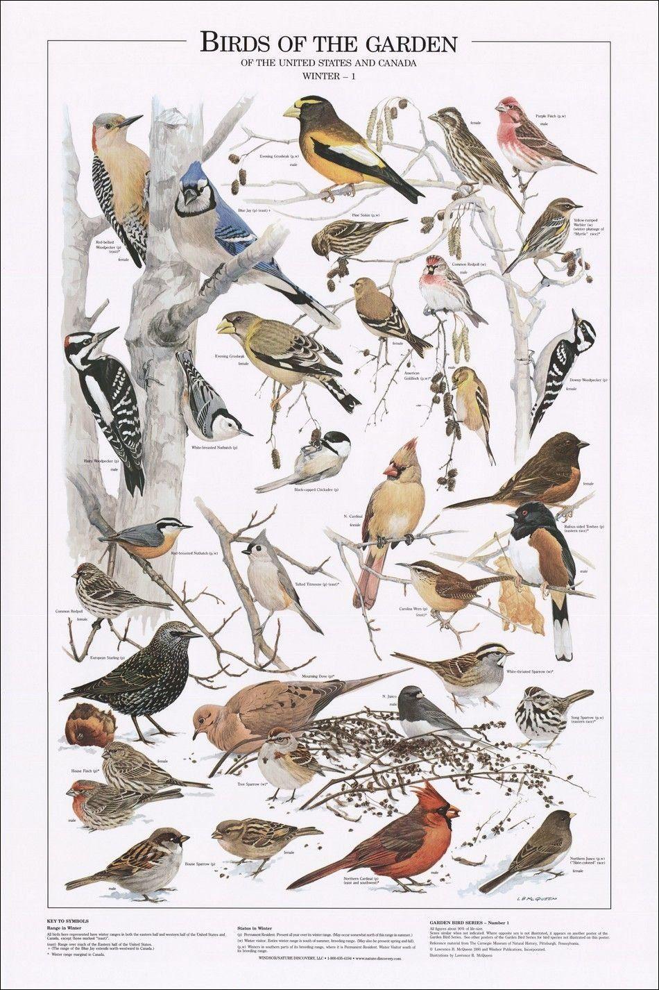 birds of the garden winter i identification chart art