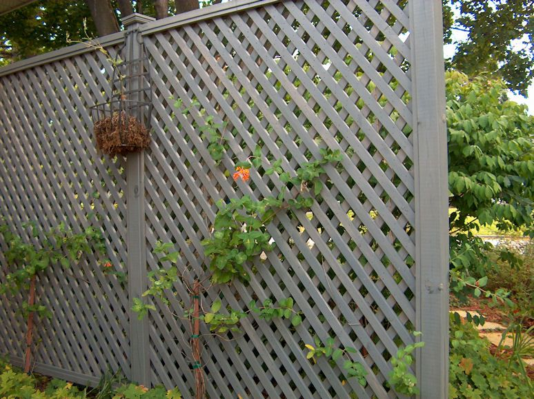 Lattice for privacy at back fence lattice privacy screen for Lattice screen fence