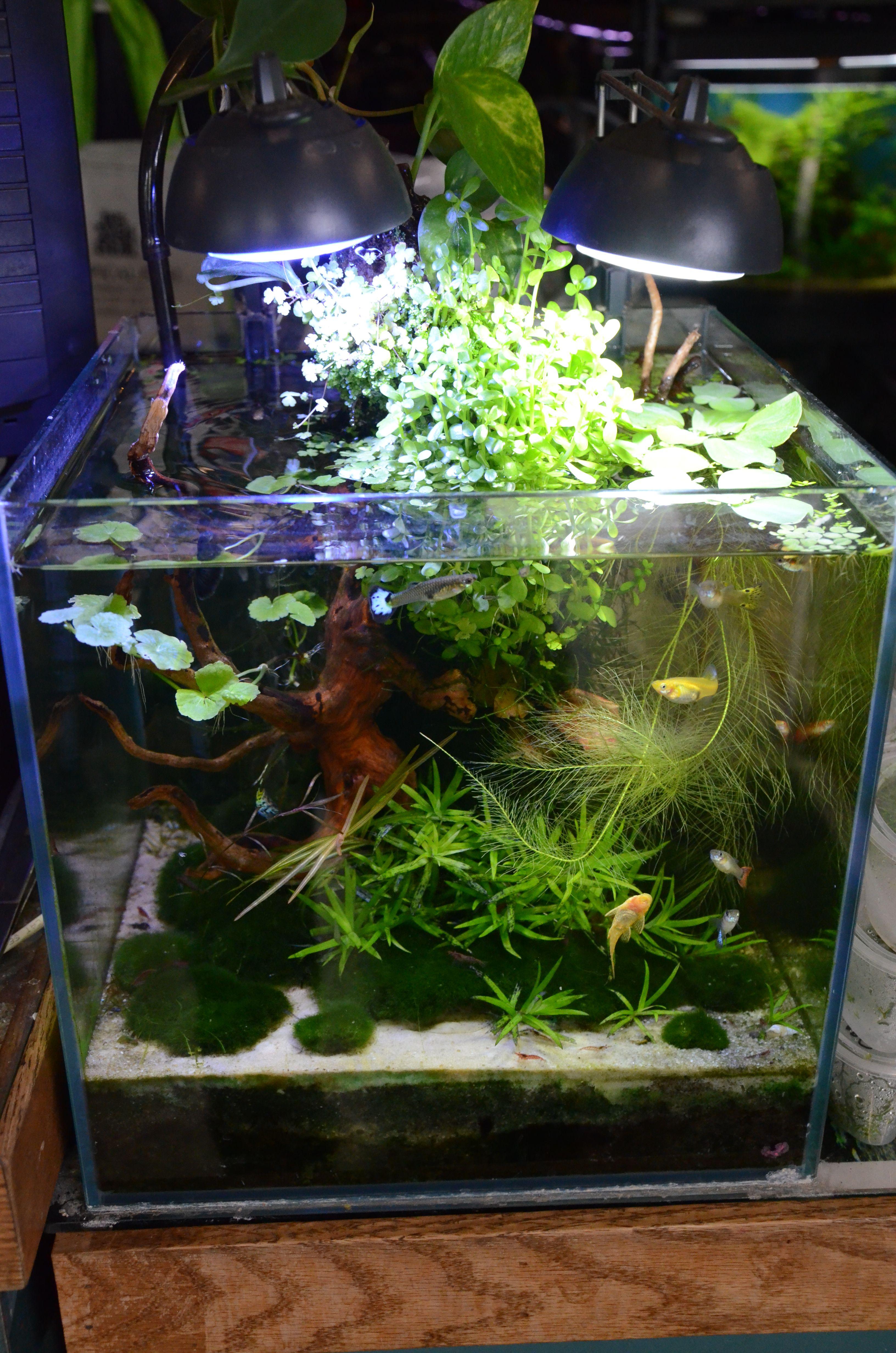Fish Aquarium Rates In Delhi - Nano tanks are fantastic