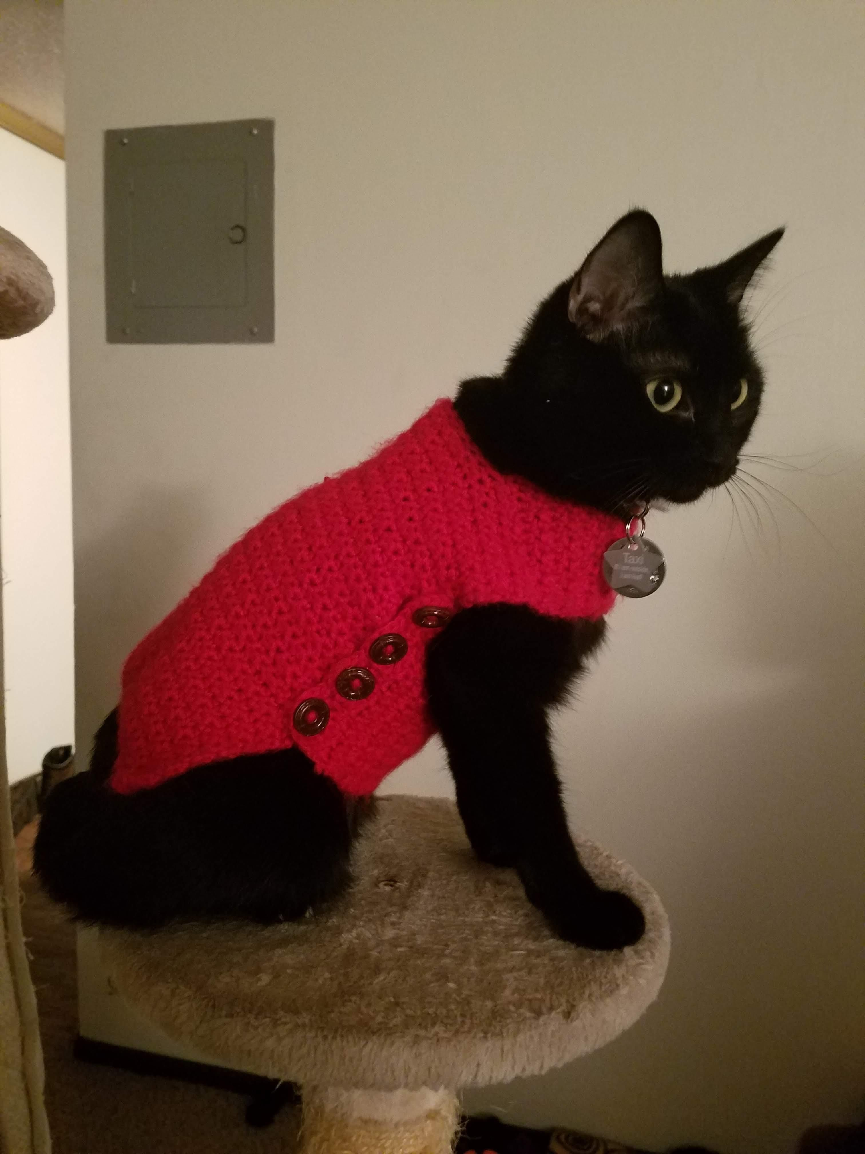 Taxi Getting Red Y For Christmas In Her Sweater Cat Having Kittens Baby Cats Christmas Cats