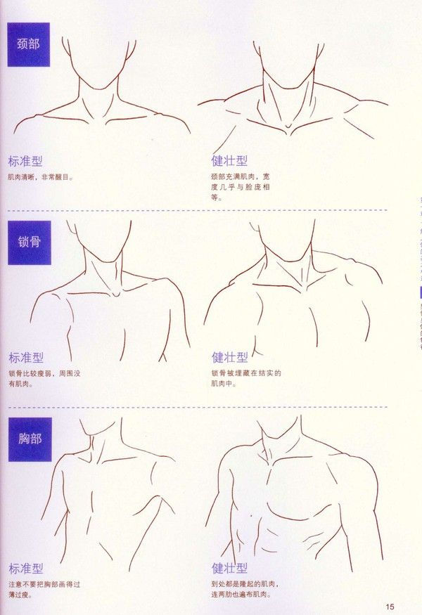 Neck and shoulders artist reference anatomy drawing tutorial. | Hiro ...