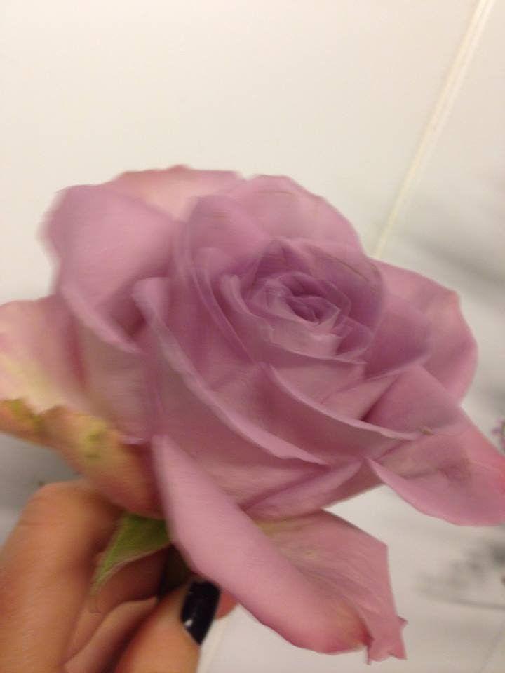 Rose - Memory lane Denne fargen står for: Jeg ønsker deg lykke og hell. Den Symboliserer også for: mistenksomhet og misunnelse
