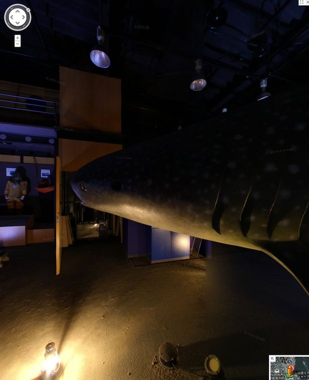 Tour A Creepy, Abandoned Shark Museum With Google Street