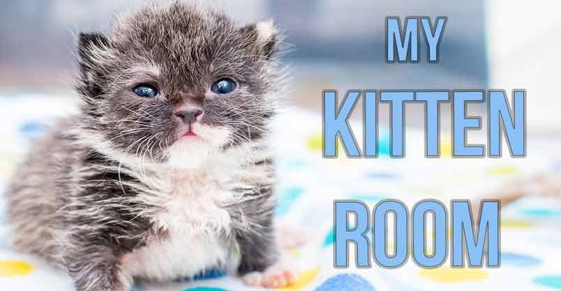 Click To Meet Seven Orphaned Kittens That Are Being Cared For In Kitten Lady S New Nursery Baby Kittens Cat Care Kitten Care