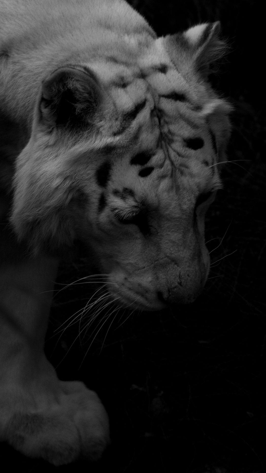 Black And White Tiger Wallpaper Mobile Tiger Wallpaper Iphone Wallpaper Images Animal Wallpaper