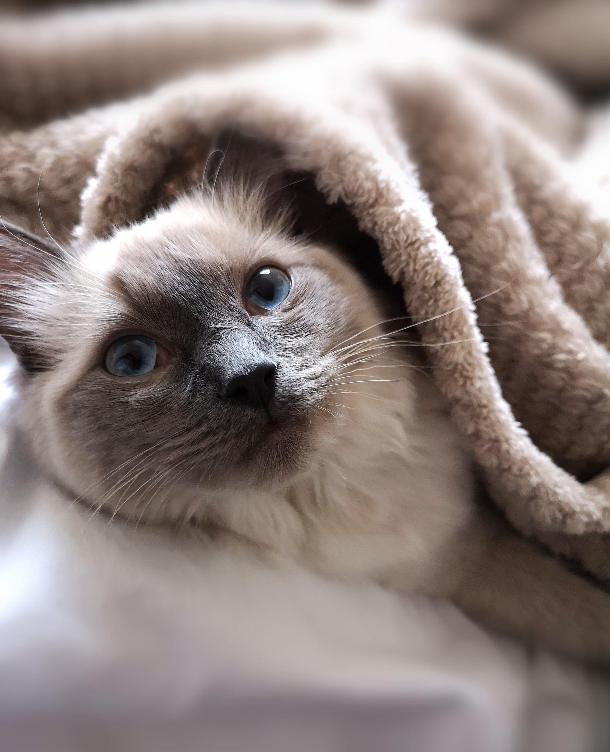 Dawhud Direct Super Soft Full Queen Size Fleece Blanket By Jenny Newland 75 X 90 Kitten Collage Cat Throw Blanket Fleece Throw Blanket Fleece Throw