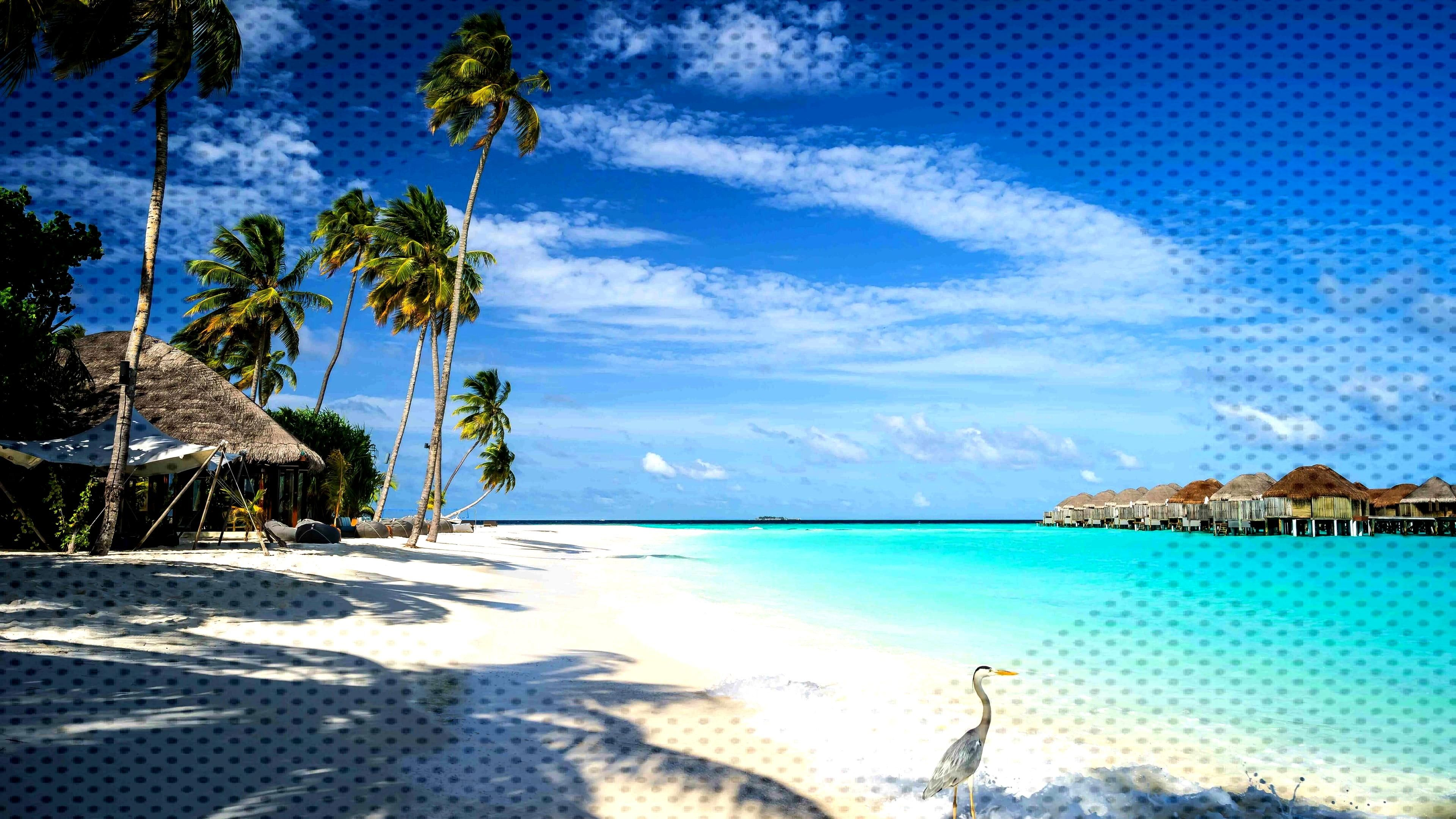 palm tree arabian sea