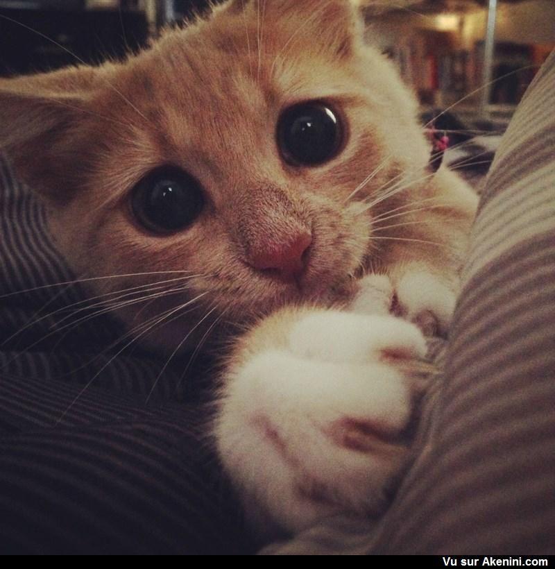 Photos Fun Chat Avec Un Regard Vraiment Attendrissant Cute Animals Cute Baby Animals I Love Cats