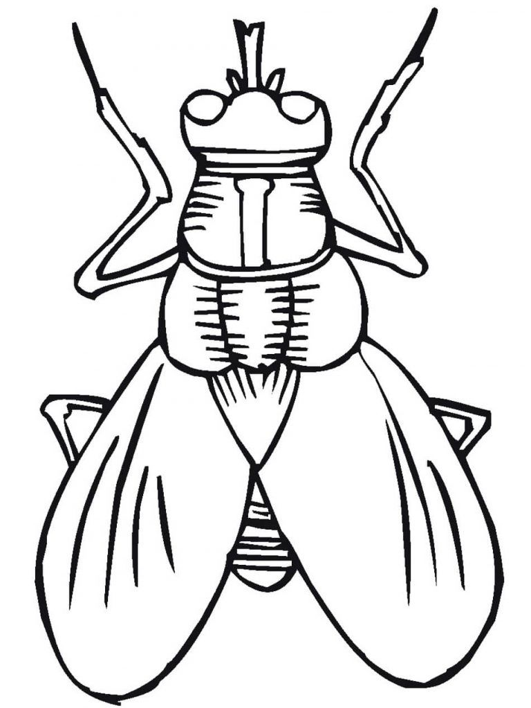 Insect Coloring Pages Coloring Rocks Insect Coloring Pages